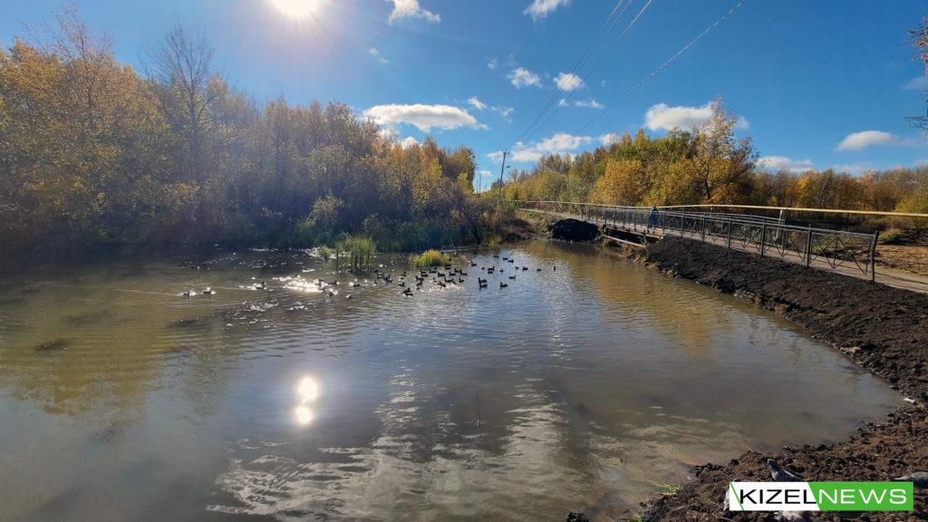 Утки в Кизеловском пруду.Дата: 2 октября 2021 г.